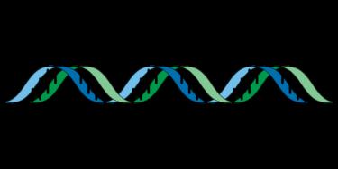 ユーグレナ・マイヘルス/ジーンクエストの遺伝子解析サービスの結果