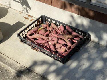 【子連れ名古屋周辺お出かけ】芋掘り/野菜採集体験と料理 @安城市