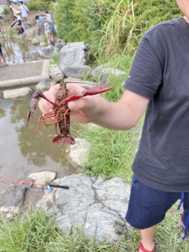 【子連れ名古屋周辺お出かけ】名古屋市内でザリガニ釣り4 今までで一番の大物! @天白公園の池